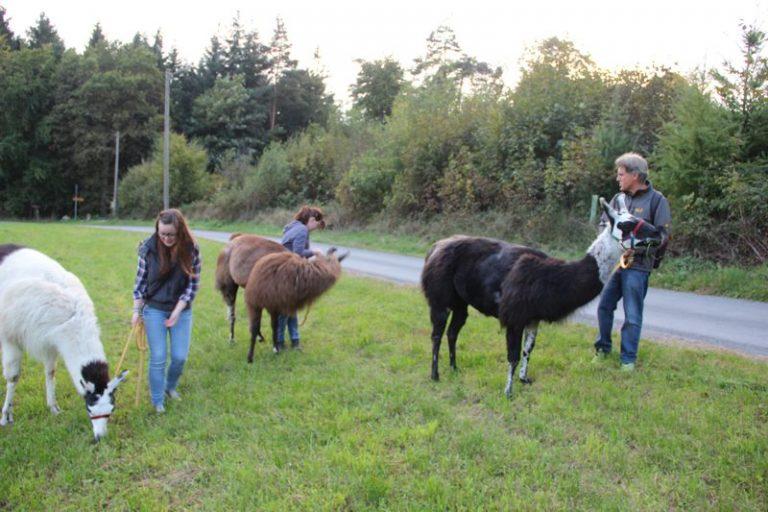 etwas schwerer hatten es diese drei, hier haben offensichtlich die Lamas die Führung übernommen